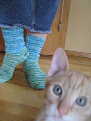 Trekking socks, self-dyed with Kool-Aid - and with cat