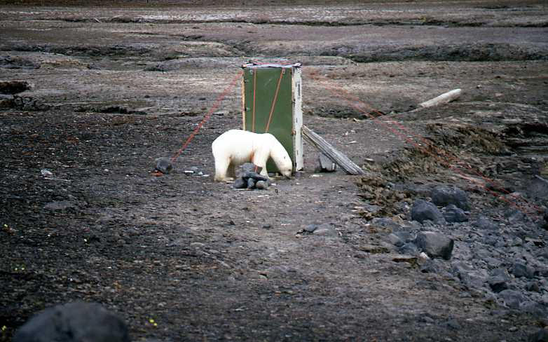 http://www3.hi.is/~oi/Svalbard%20wildlife%20and%20landscape/Polar%20bear%20close%20to%20shithouse.jpg