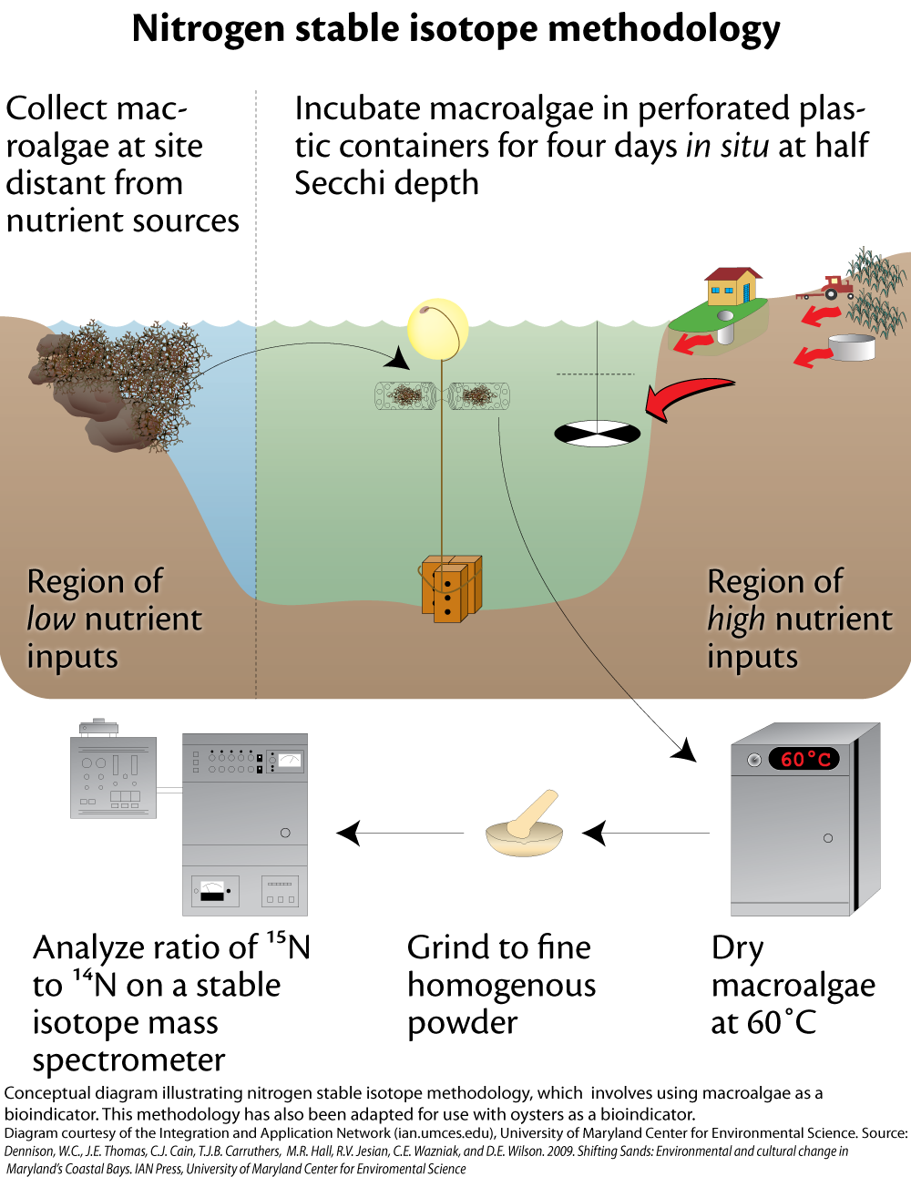 geological applications of the stable isotopes of nitrogen Forensic applications of nitrogen and oxygen isotopes in tracing nitrate sources in urban environments s r silva us geological stable isotope applications in.